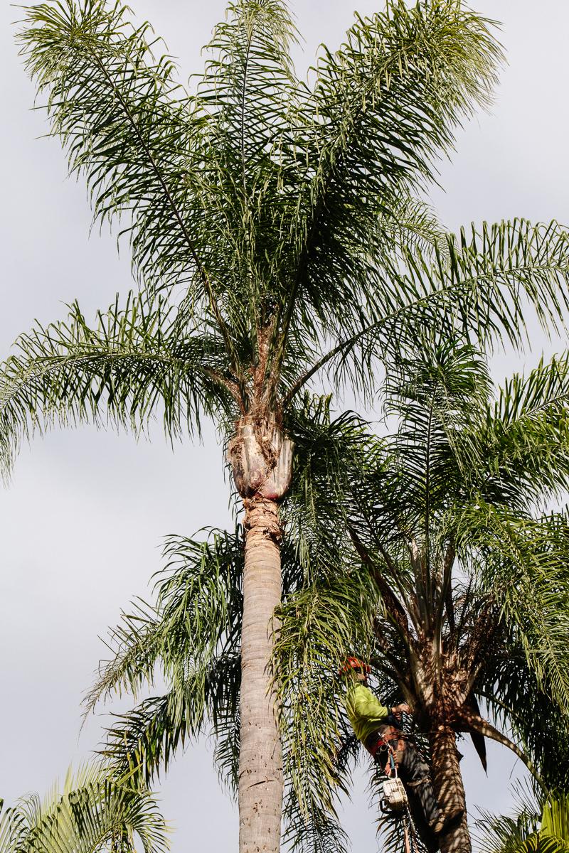 tree services Brisbane