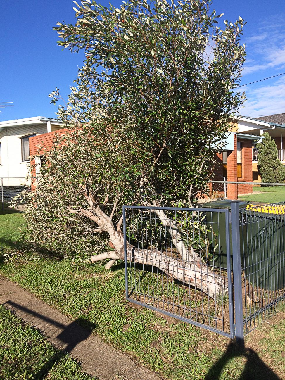 Tree Removal North Brisbane