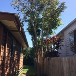 How To Do A Tree Removal-Brisbane North