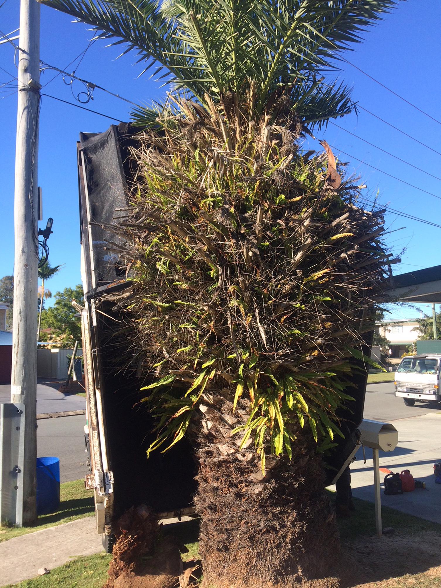 North Brisbane tree lopping service